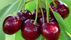 When ripe cherry
