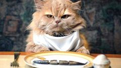 What to feed cat after castration