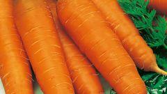 Почему морковь вырастает горькой