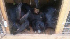 Как предотвратить распространение инфекционных заболеваний у кроликов