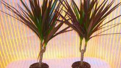 Базовые сведения по уходу за комнатными растениями