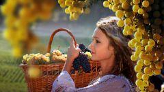 Как выбрать саженец винограда для средней полосы России