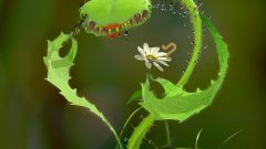 Хищные растения для дома