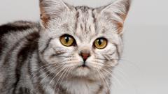 Как выбрать наполнитель для кошачьего лотка