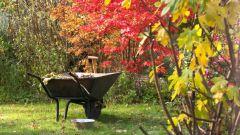 Самые важные работы в саду в октябре