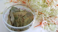 Можно ли солить подмороженную капусту