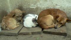 Меры предосторожности при общении с бездомными животными