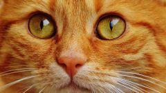 Как ухаживать за котом после операции по кастрации