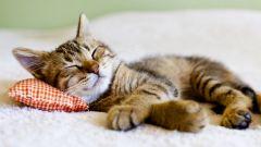 Как правильно ставить ударение в слове «дремота»