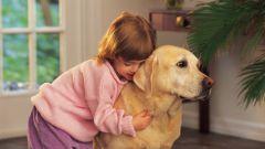 Какое домашнее животное завести семье с маленькими детьми
