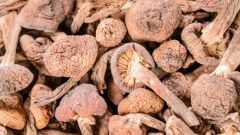 Как приготовить сушеные грибы шиитаке