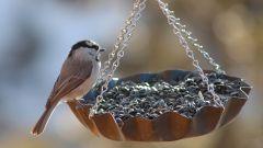 Как смастерить кормушку для птиц из пластиковой бутылки?