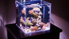 Какой мини-аквариум выбрать, как оборудовать и кем заселить