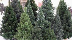 Как выбрать качественную и безопасную искусственную елку