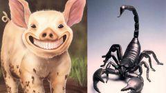 Сочетание гороскопов: Свинья-Скорпион