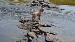 Сочетание гороскопов: Собака-Водолей