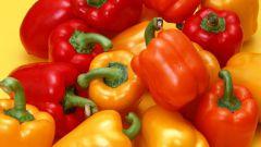 Как посадить перец на рассаду в домашних условиях