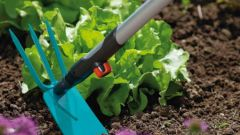 Stealth gardener: determination of type of soil to weeds and wild plants