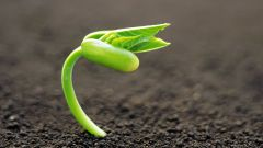 Как определить кислотность почвы в огороде