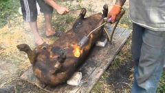 Как забить свинью