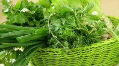 Как вырастить раннюю зелень