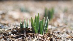 Что посадить в апреле