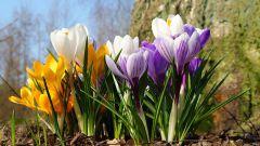 Лунный календарь посадки растений в апреле 2016 года