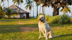 Лучшие породы собак для охраны частного дома