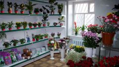 Business idea: flower shop