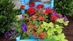 Как необычно украсить дачный участок цветами