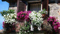 Основные правила и советы при озеленении балкона