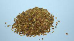 Польза и противопоказания употребления цветочной пыльцы