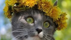 Как ухаживать за кошкой летом