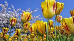 Лунный календарь посадки растений в мае 2016 года