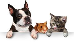 What to do to your pet who trusted you