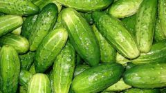 How to get a stunning crop of cucumbers