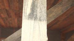 Как избавиться от грибка на древесине