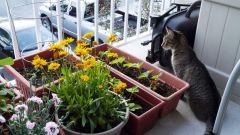 Как превратить маленький балкон в сказочный цветущий садик