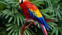 Как выбрать ребенку говорящего попугая