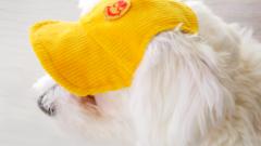 Как сшить шапочку для собаки
