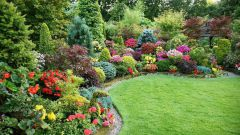 Planning a garden: how to make a garden beautiful
