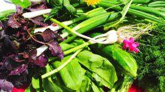 Полезные травы, которые помогут летом
