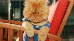 12 причин завести кота