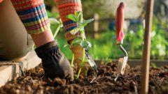 Почему нужно заниматься садоводством