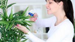 Комнатные растения: правильное опрыскивание