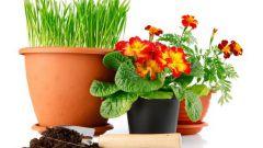 Пересадка растений – важная составляющая ухода