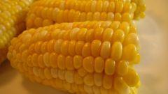 Как сварить кукурузу в мультиварке
