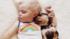 Домашнее животное: за и против