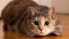 Как кошки показывают свою чувства