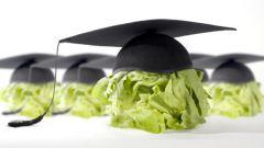 Полезная еда для оптимизации работы мозга